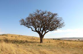 Krajobraz Kenii